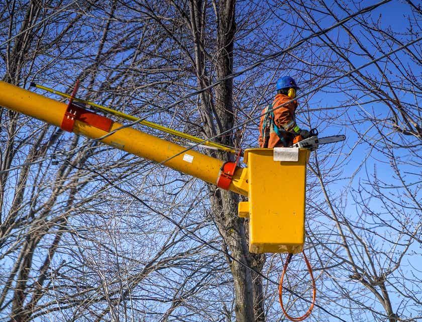 Nombres para negocios de poda de árboles