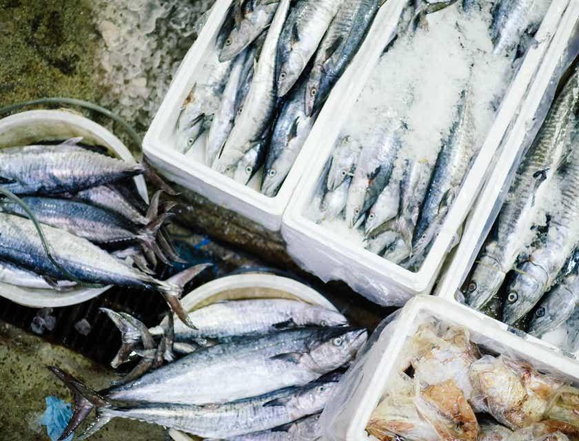 Nombres creativos para empresas de pescado