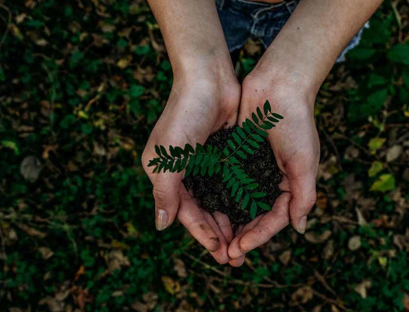 Nombres para fundaciones ambientales