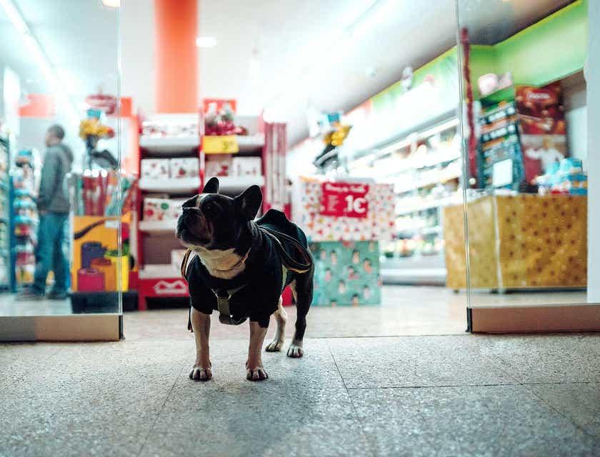 Nombres para tiendas de mascotas