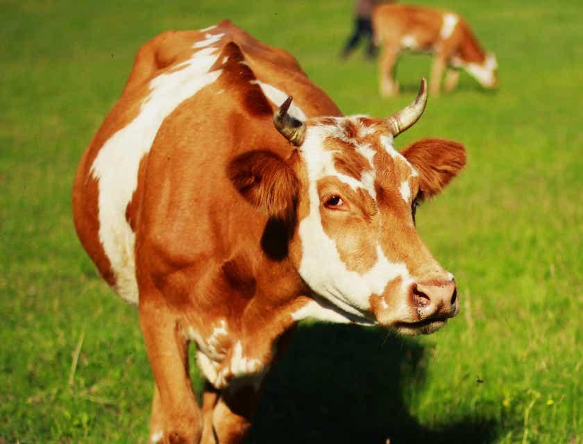 Animal Care Business Names