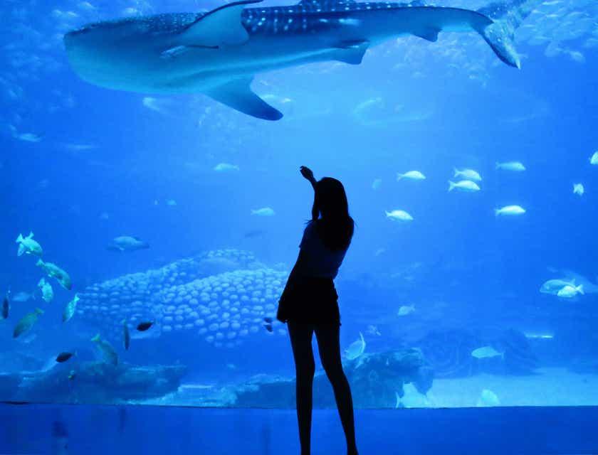 Aquariums Business Names