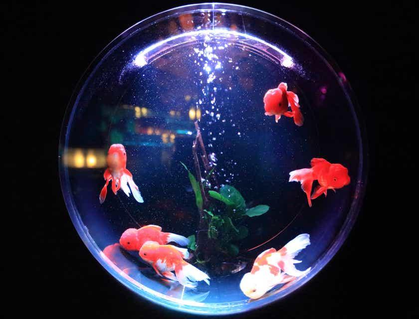 Aquarium Service Business Names
