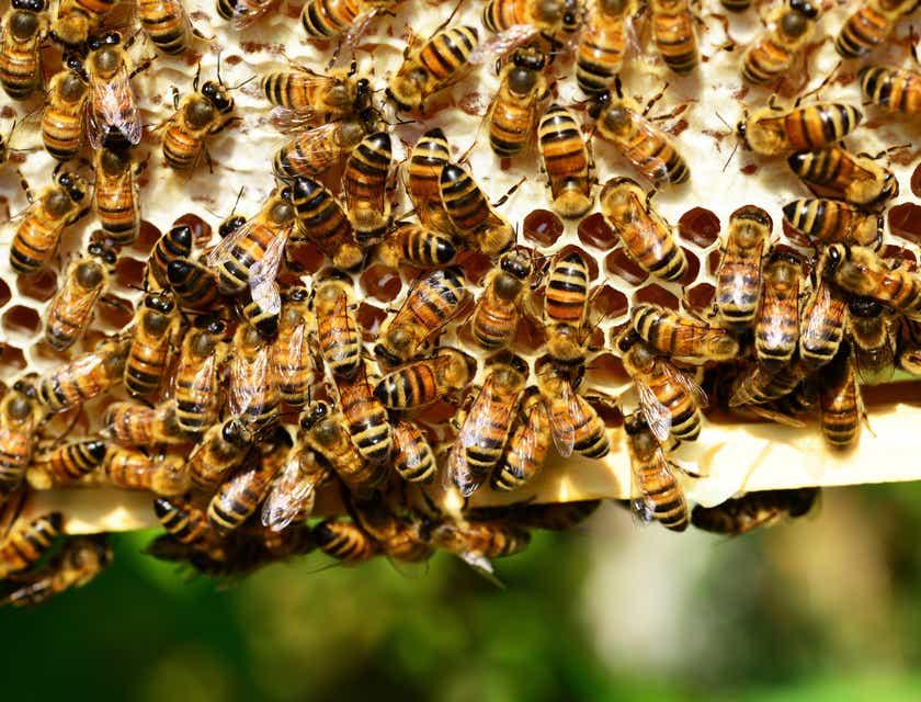 Nombres para negocios de miel de abeja
