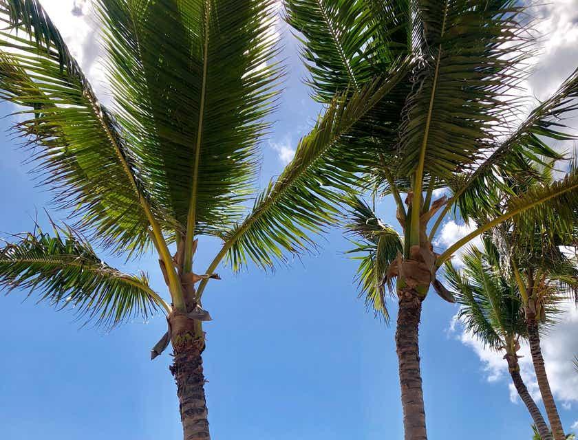Cómo crear una empresa en la República Dominicana