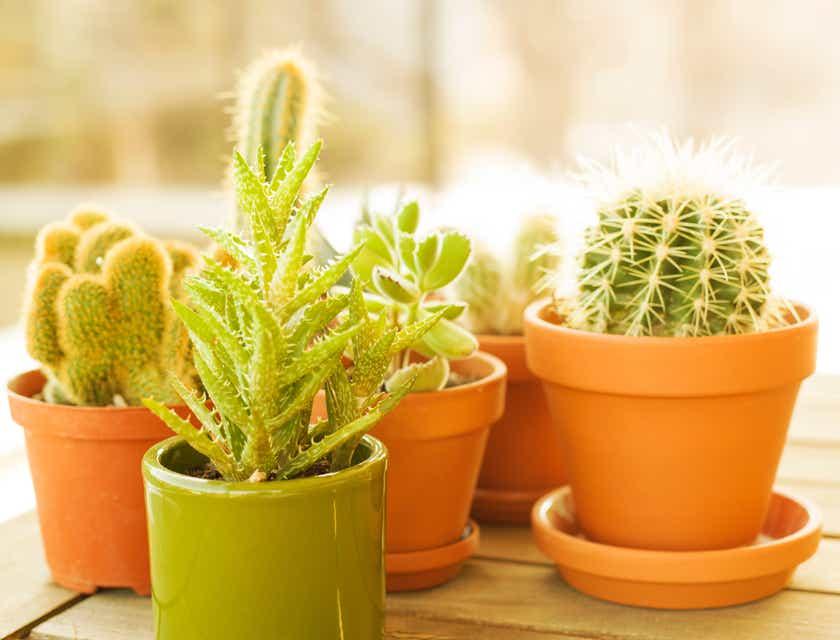 Firmennamen für Kaktus-Geschäfte