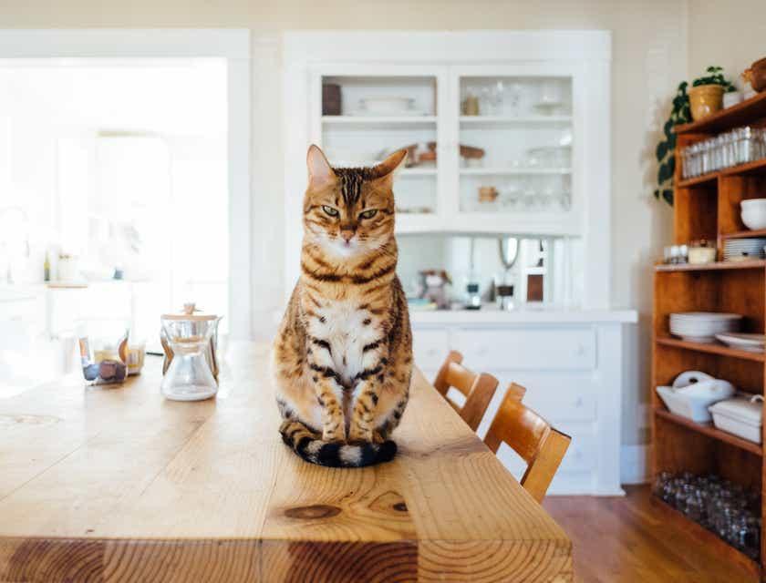 Nombres para negocios para gatos
