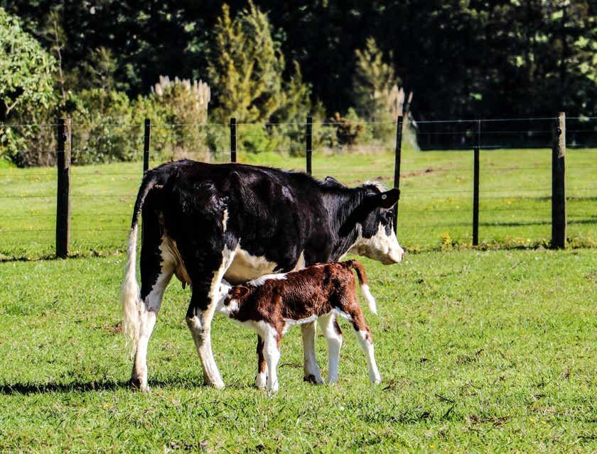 Nombres para granjas de lácteos