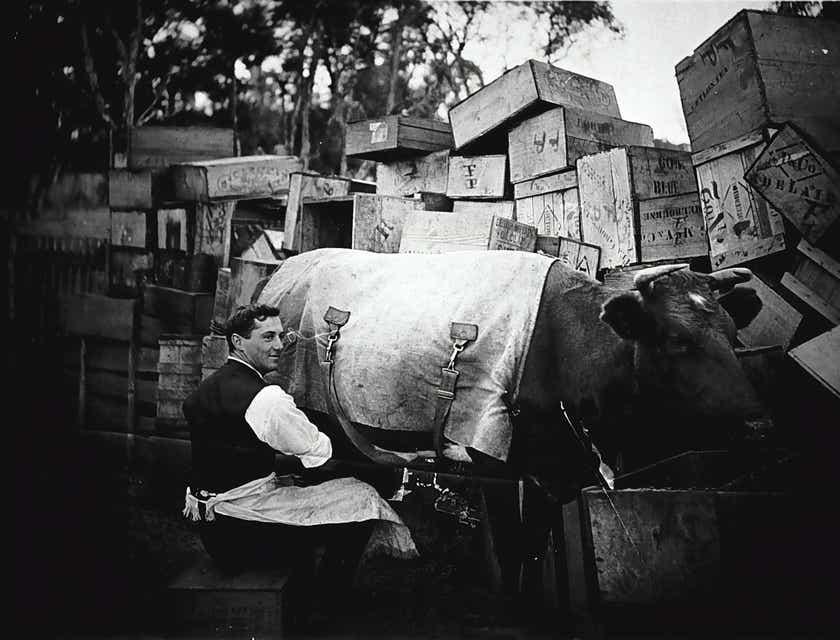 Dairy Farm Business Names