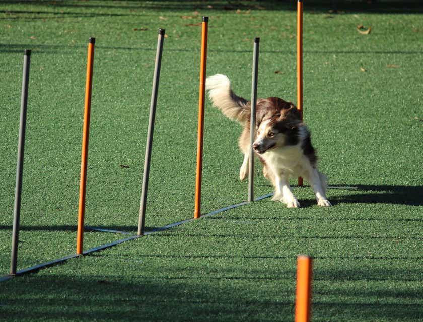 Nombres para empresas de entrenamiento para perros