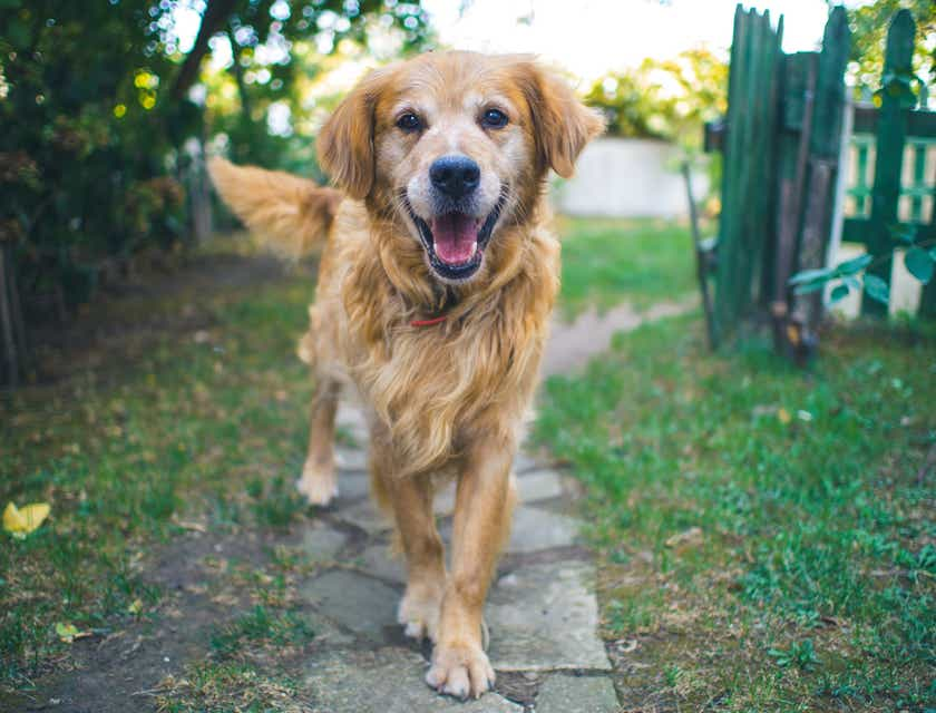 Nombres para negocios de eliminación de desechos de perro