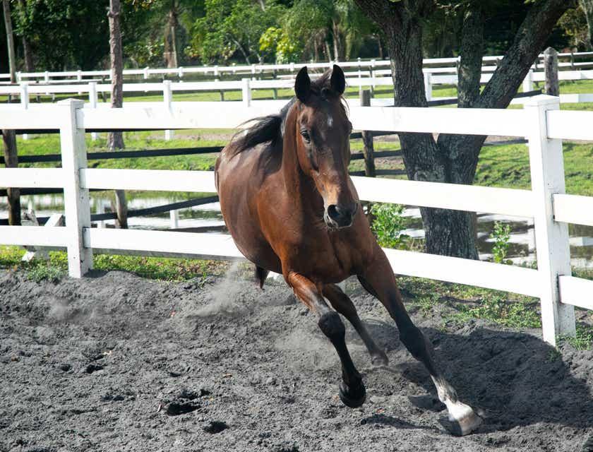 Nombres para negocios de caballos
