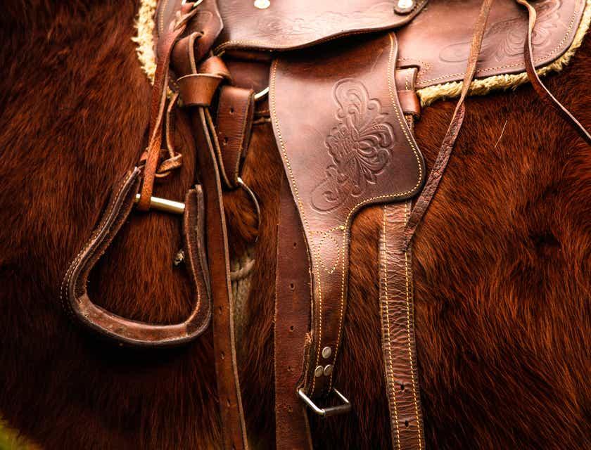 Nomes para lojas de equipamentos para cavalos