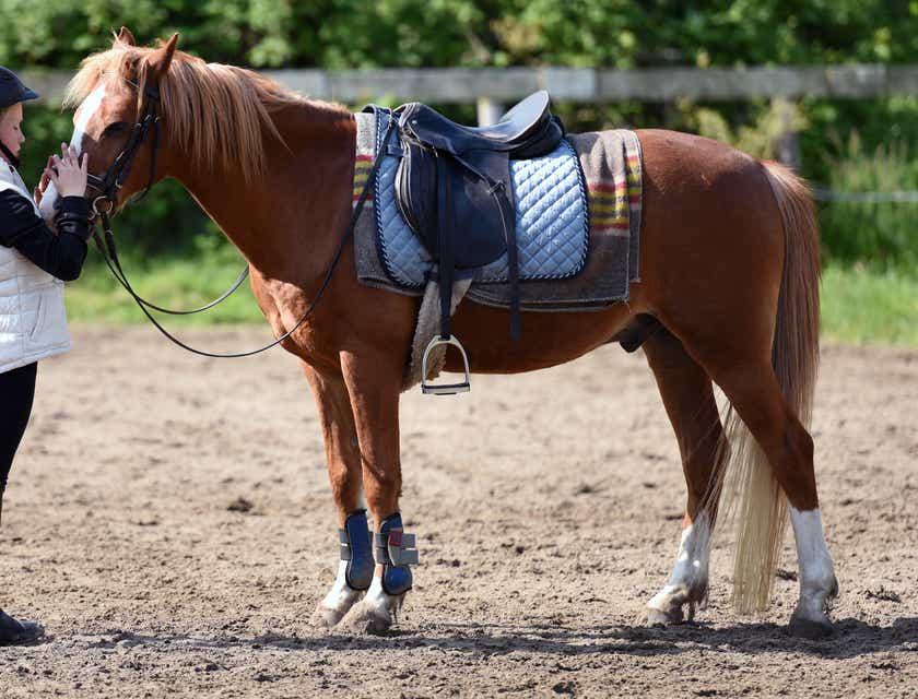 Horseback Riding Business Names
