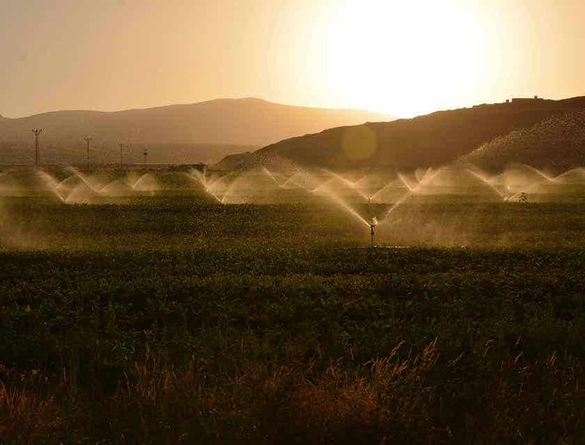 Nomes para empresas de irrigação