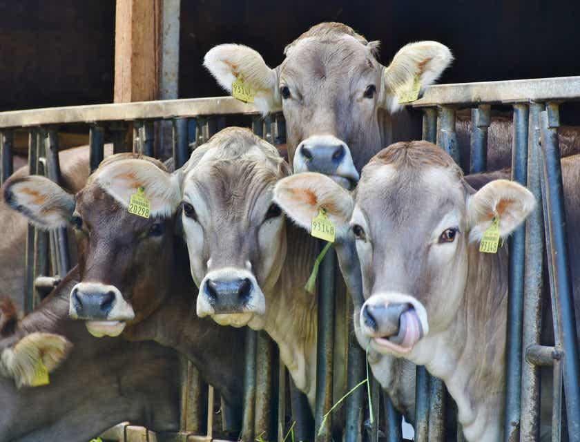 Livestock Business Names