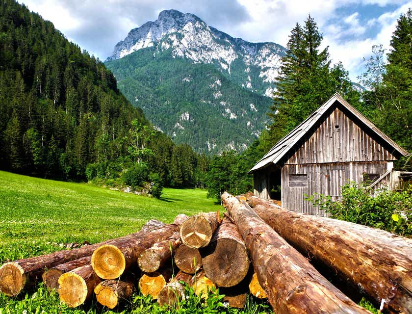 Logging Business Names