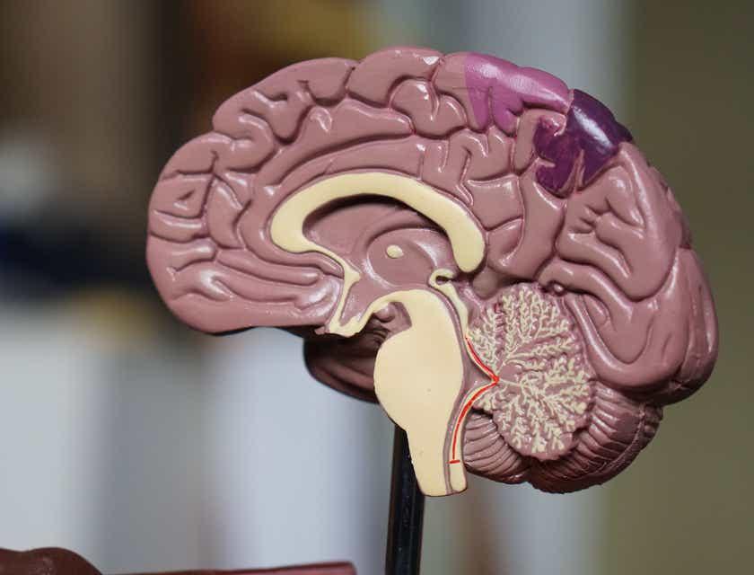 Nomes para clínicas de neurologia