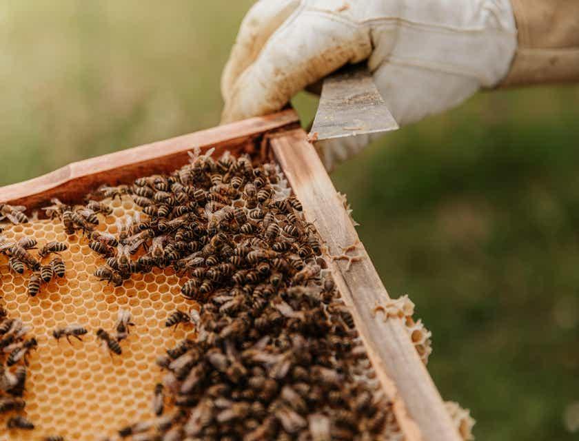 Nombres para apiarios