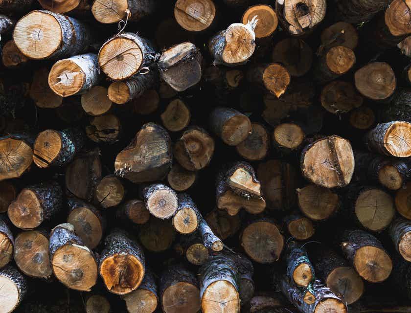 Nombres para empresas de madera