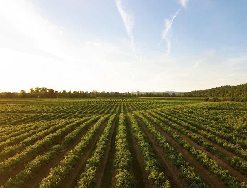 Nombres para empresas vitivinícolas