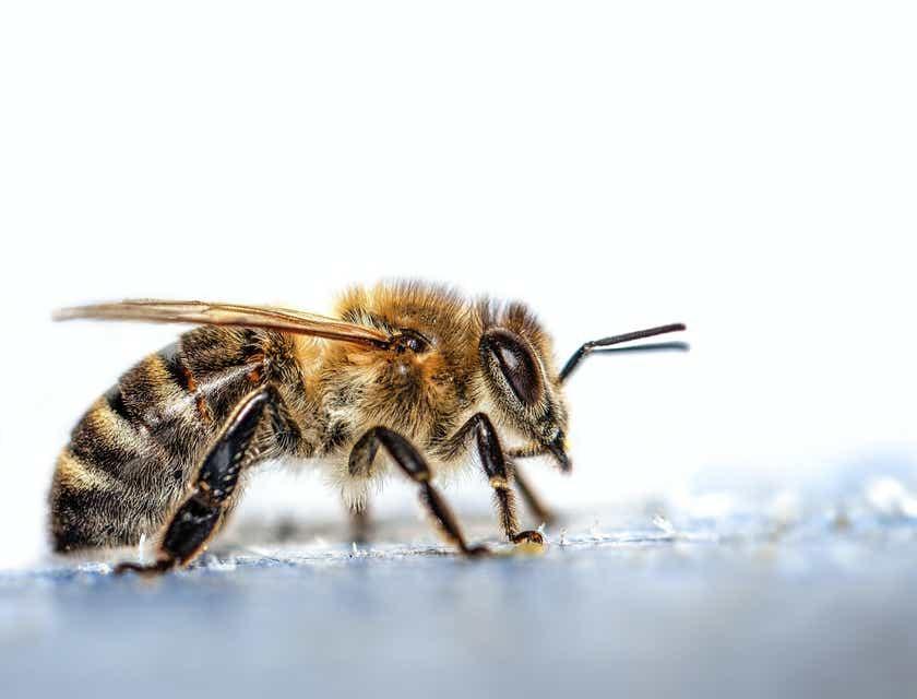 Nombres para negocios de apicultura