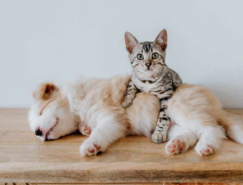 Pet Insurance Business Names