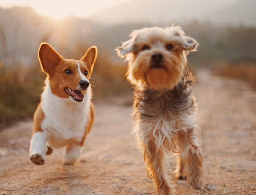Pet Photography Business Names