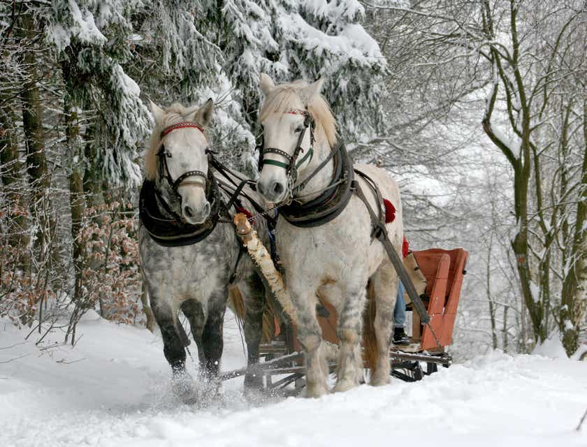 Sleigh Ride Business Names