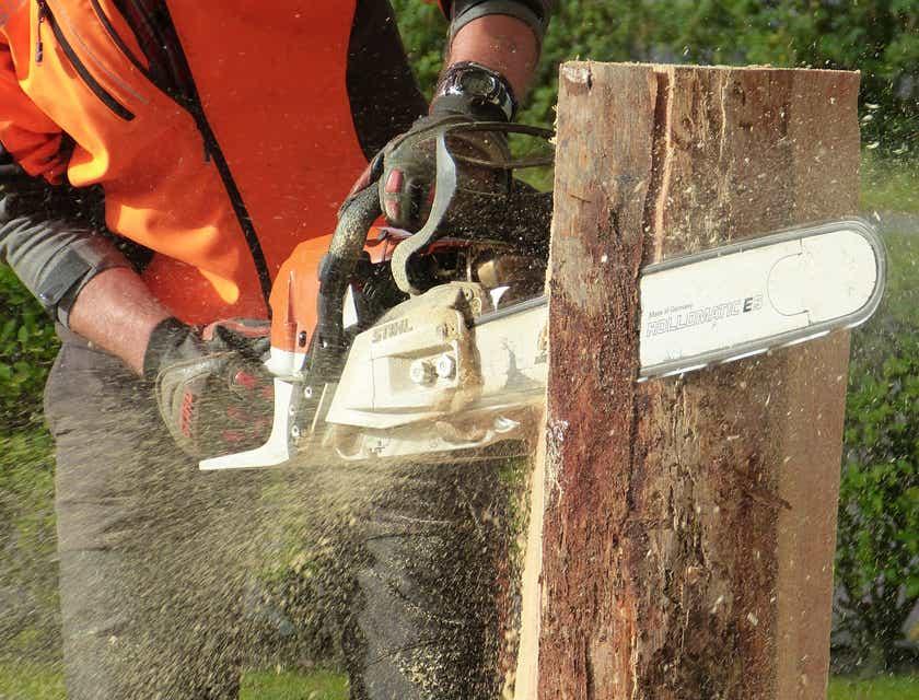 Noms d'entreprise d'abattage et d'élagage d'arbres